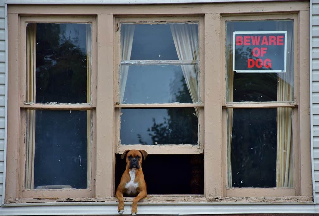 Dog at window of house