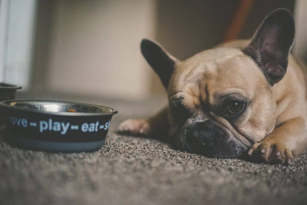 Dog with food bowl