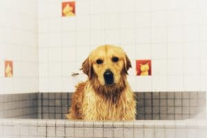 Dog in bath