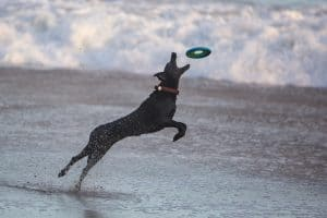 Dog on beach with frisbee