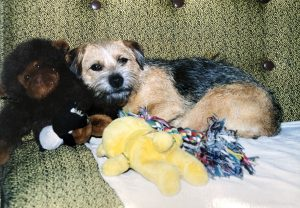 Miss mally with toys