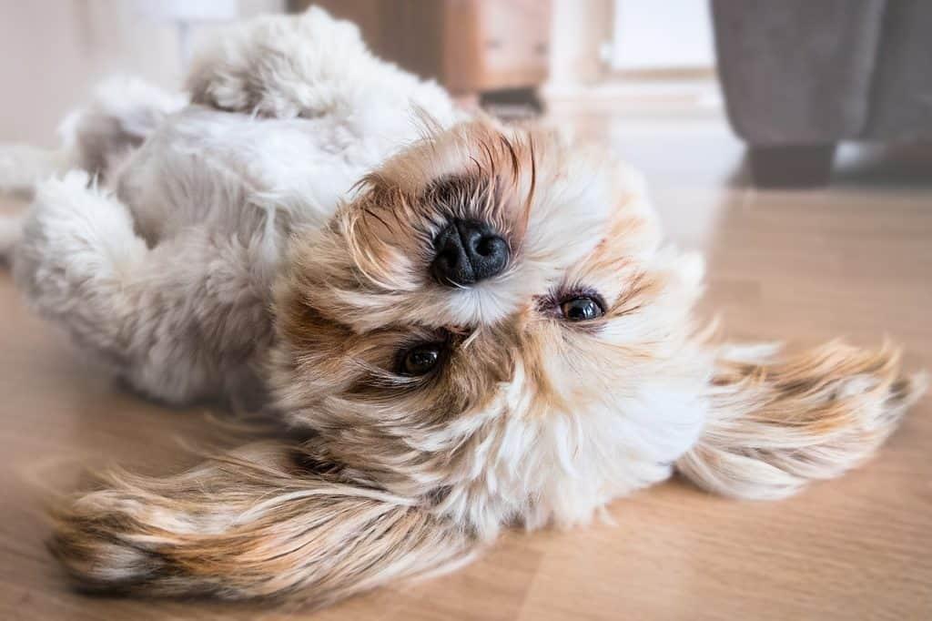 cute dog on back