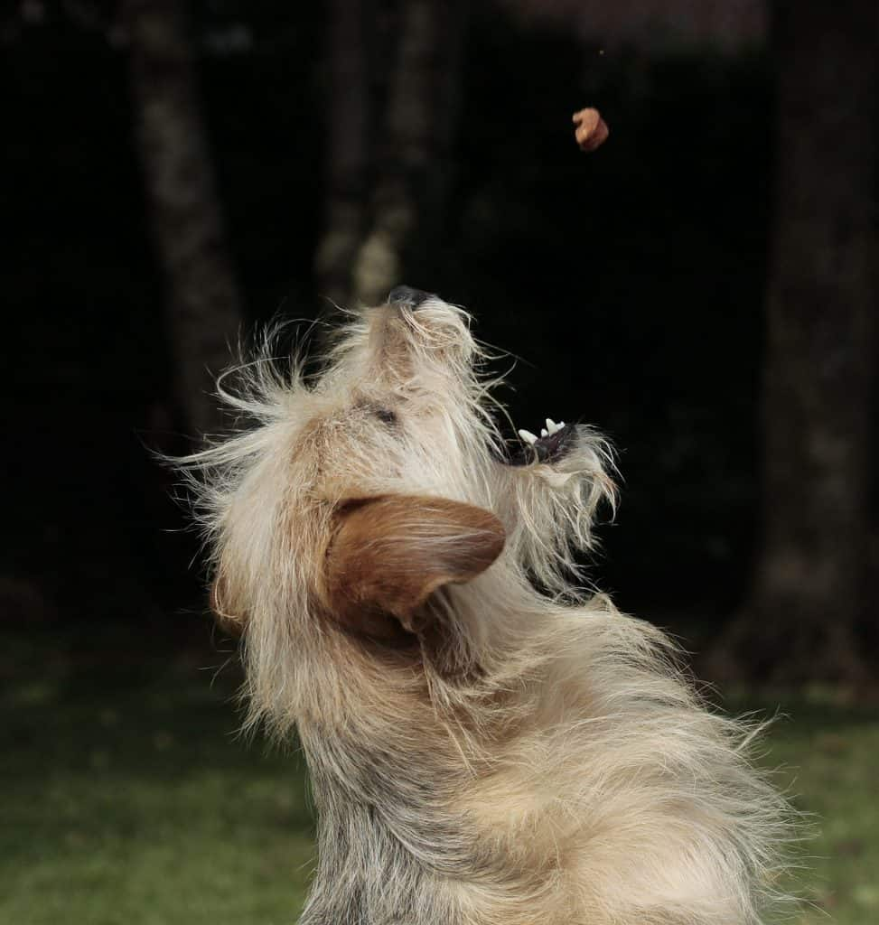 dog catching nut