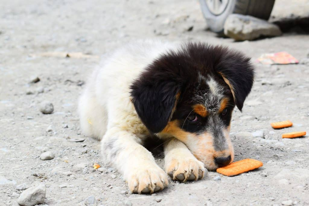 dog on road with biscuits