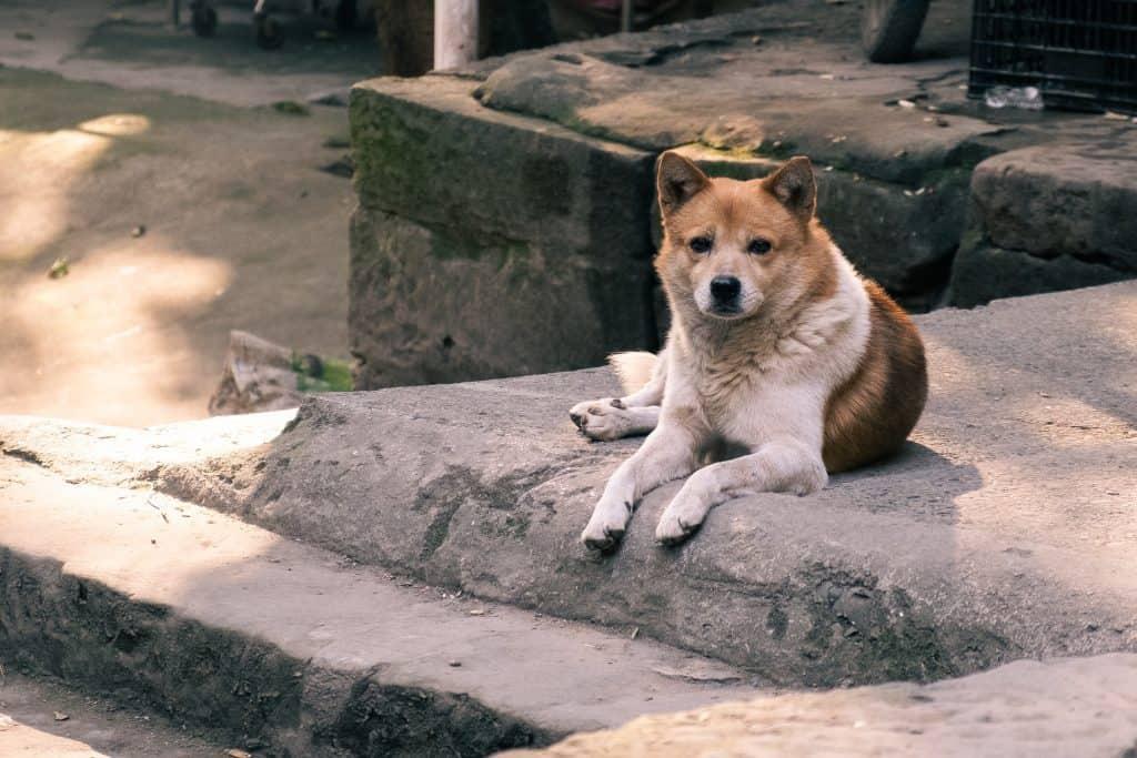 Dog on concrete
