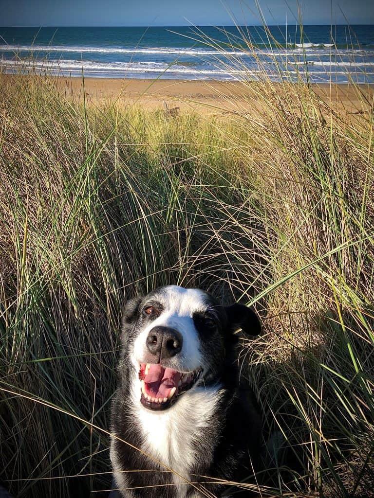 Jinks at beach