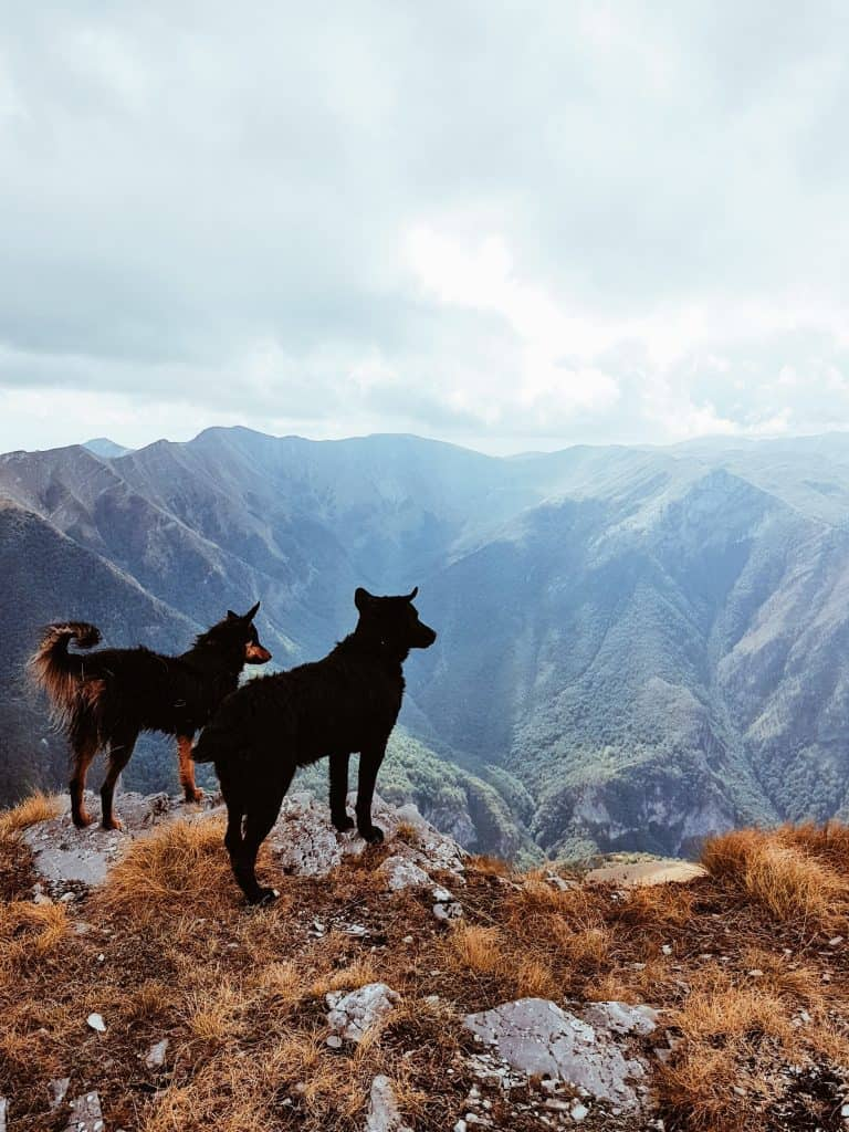 two dogs on mountain