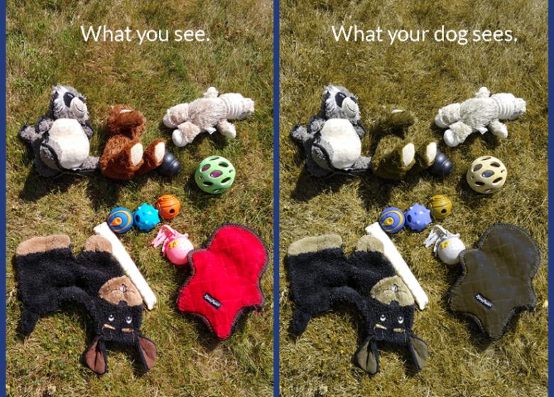 vision comparison