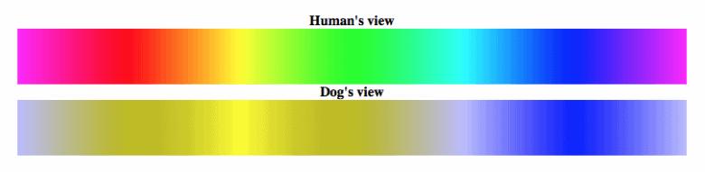 Dog_Vision_Spectrum_1